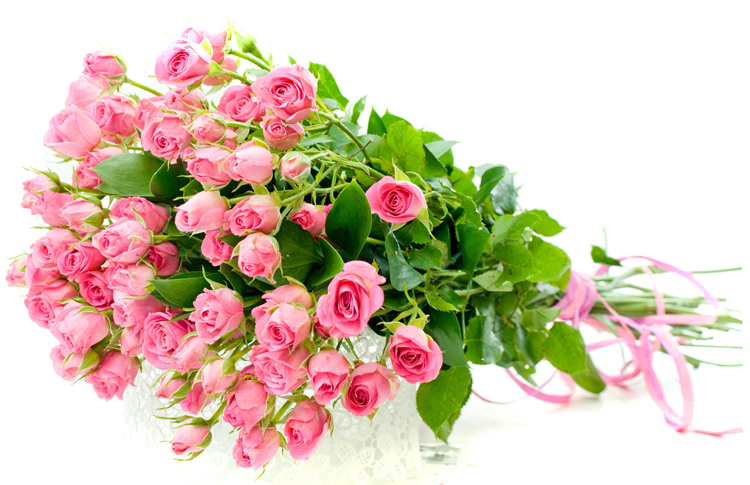 Лилия цветок сколько стоит