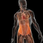 Сколько в среднем стоит МРТ всего организма