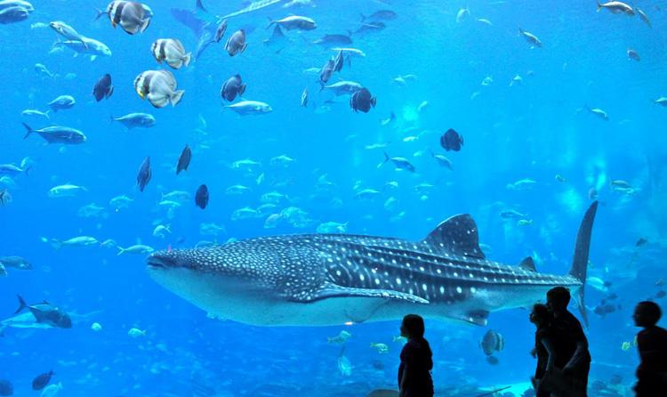 Касатка в океанариуме