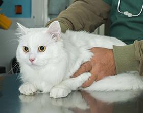 Сколько в среднем стоит обследование кошки у ветеринара?