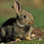 Сколько стоит живой заяц и где его можно купить