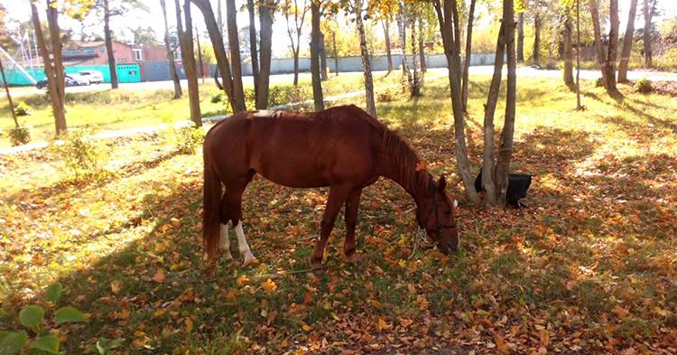 Красивая живая лошадь