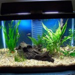 Сколько стоит аквариум для рыбок и принадлежности к нему