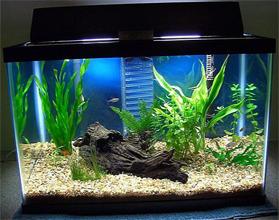 Сколько стоит аквариум для рыбок