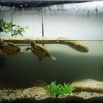 Сколько стоит аквариум для черепах