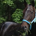 Сколько в среднем стоит живая лошадь в России: породы и цены