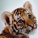 Сколько в России стоит в среднем стоит живой тигренок