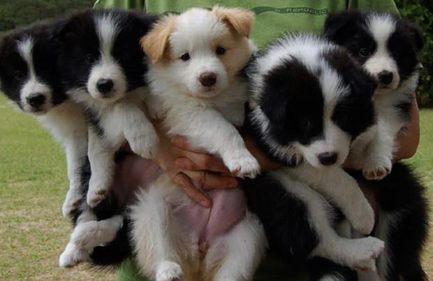 5 милых щенков