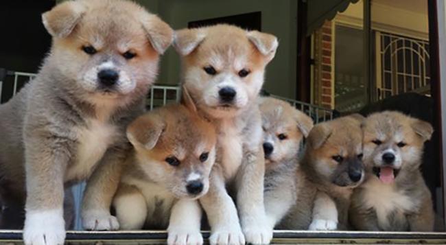 Красивые щенята