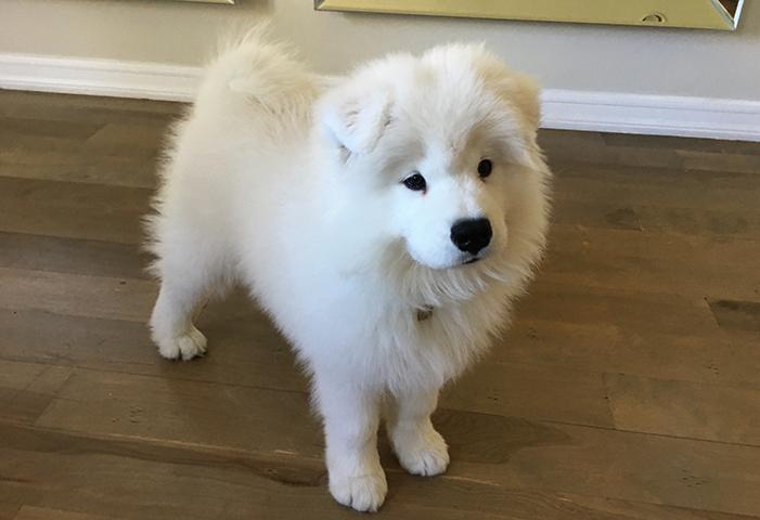 Милый щенок дома