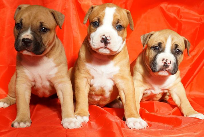 3 красивых щенка