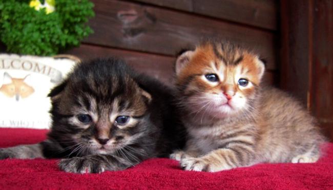 Красивые котята