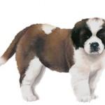 Сколько в среднем стоит щенок сенбернара и где его купить?