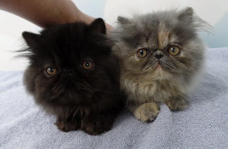 2 милых котенка