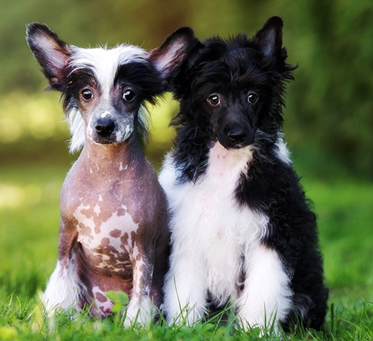 2 милых щенка