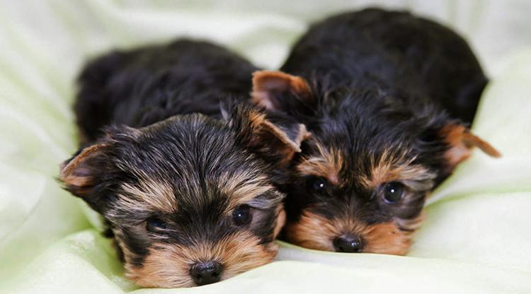 2 щенка лежат