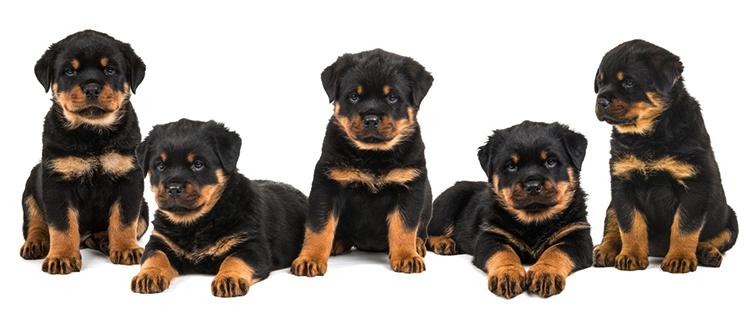 5 щенят