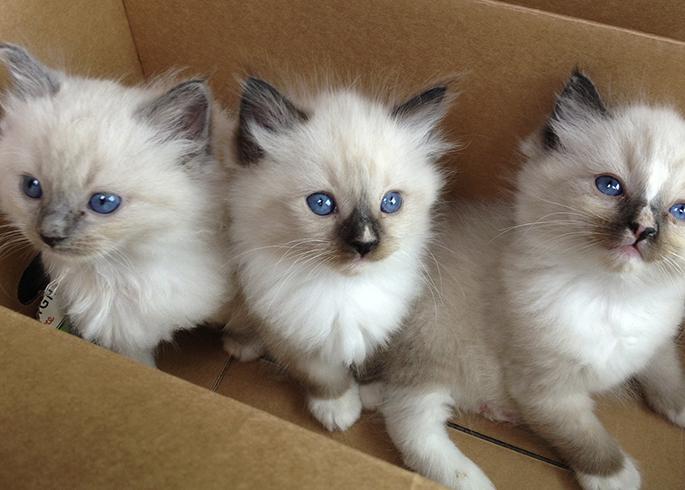 3 котенка