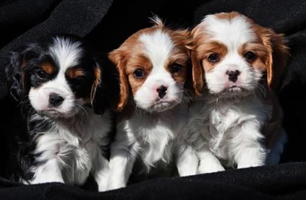 3 милых щенка