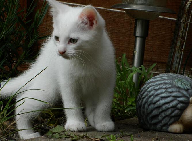 Котенок на травке
