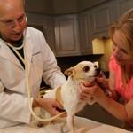 Сколько в среднем стоит вызвать ветеринара на дом?
