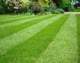 Сколько стоит устроить газон на участке: особенности и цены