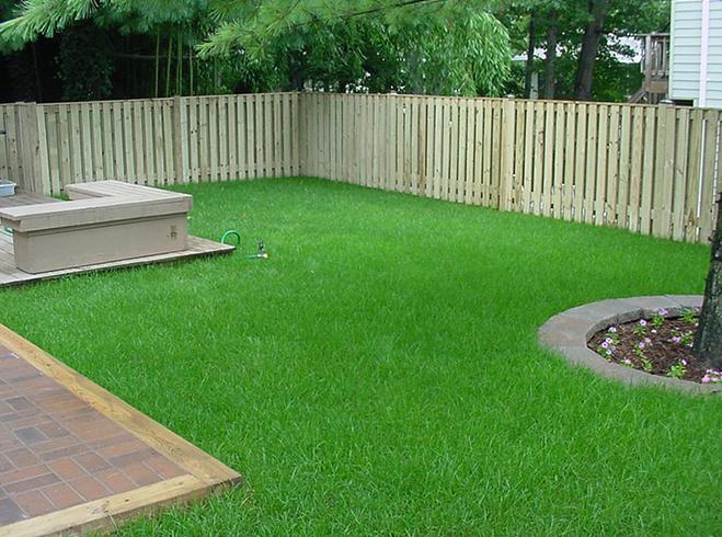 Устроенный газон на участке