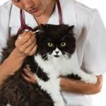 Сколько в средним стоит почистить уши кошке