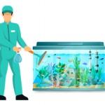 Сколько стоит почистить аквариум и от чего зависит цена
