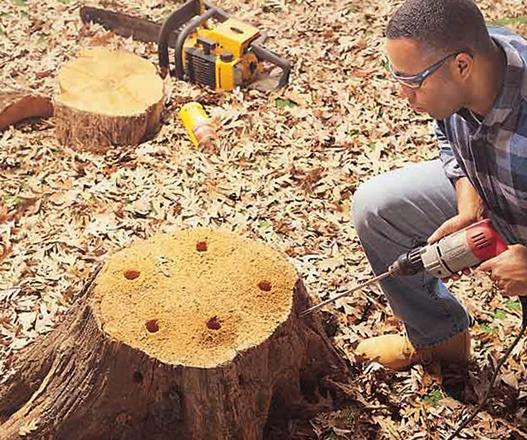 Дерево и специалист