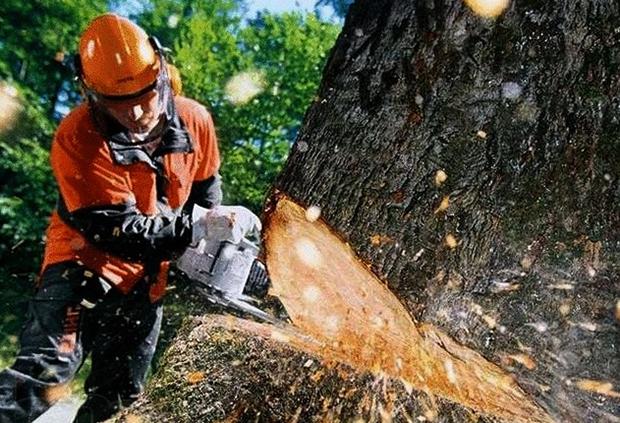 Срубка дерева