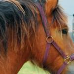 Сколько стоит содержать лошадь в месяц?
