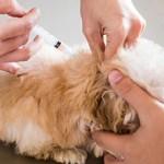 Сколько в среднем стоит прививка от чумки для щенка