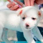 Сколько стоит прививка от бешенства собаке