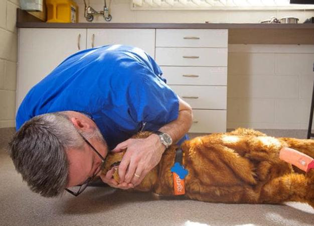 Ветеринар проводит искусственное дыхание