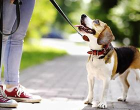 Сколько в среднем стоят услуги по выгулу собаки?