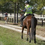 Сколько стоит заниматься конным спортом