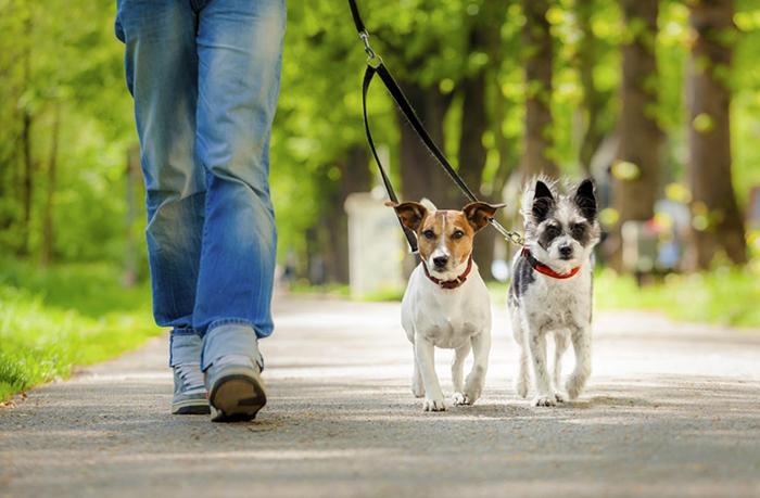 Выгул двоих собак