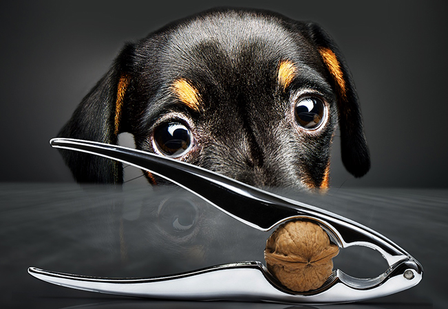 Собака перед кастрацией
