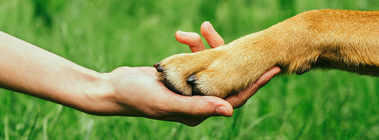 Собака со стриженными когтями