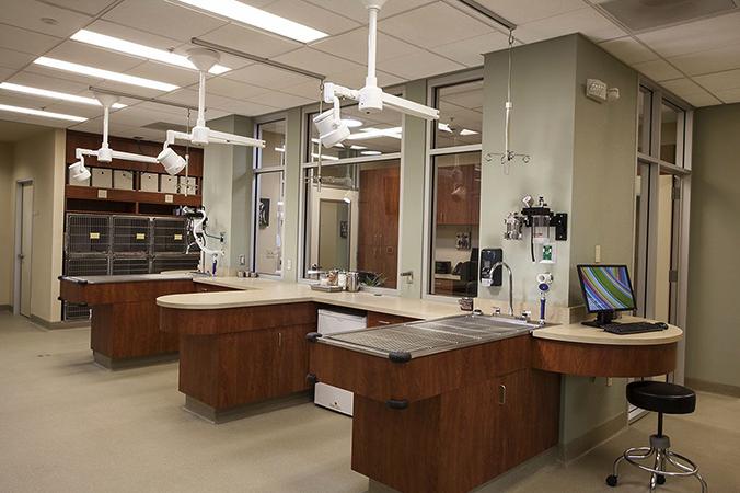 Средняя ветеринарная клиника