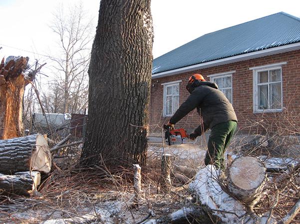 Специалист пилит дерево