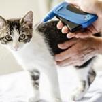 Сколько стоит чипирование кошки?