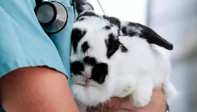 Кролик у ветеринара