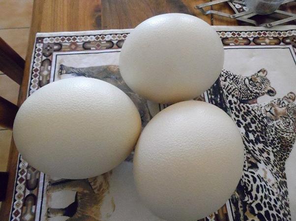 3 страусиных яйца