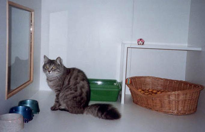 Кошка на передержке