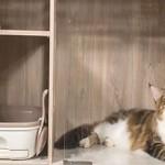 Сколько в среднем стоит передержка кошек в сутки?