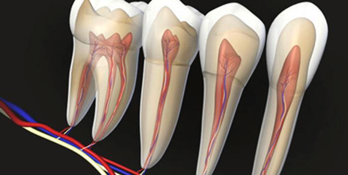 Нервы зубные