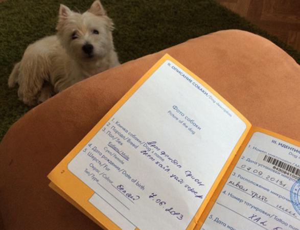Ветеринарный паспорт и собака