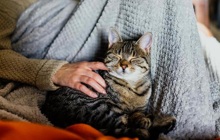 Милый кот дома